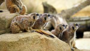 Zoology courses: studying all creatures great and small