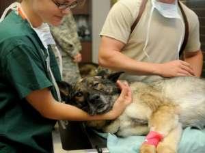 Veterinary Courses