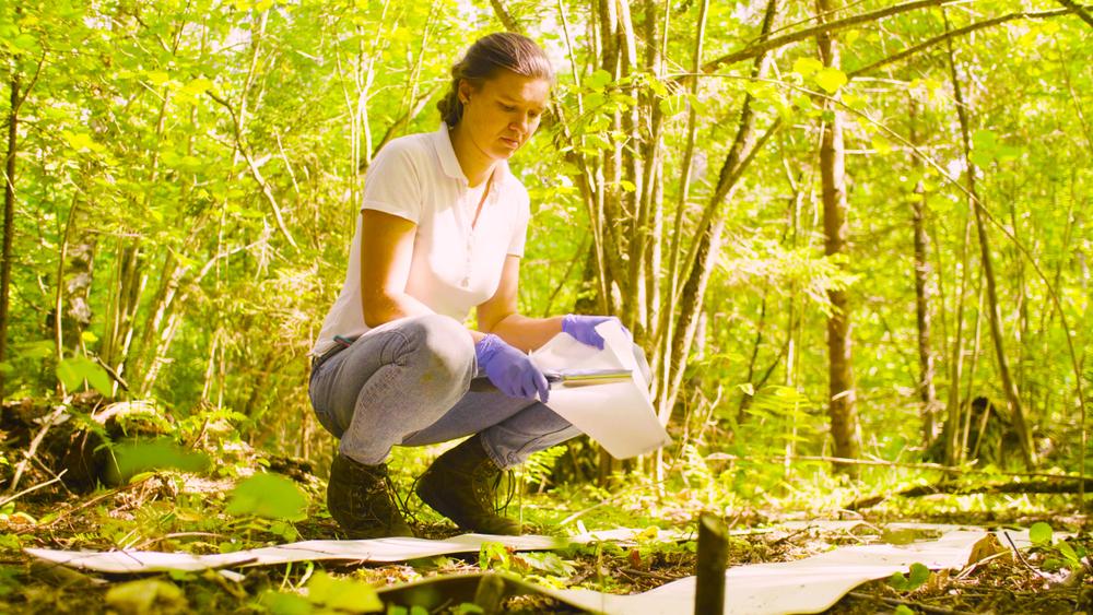 Environmental Scientists in Demand